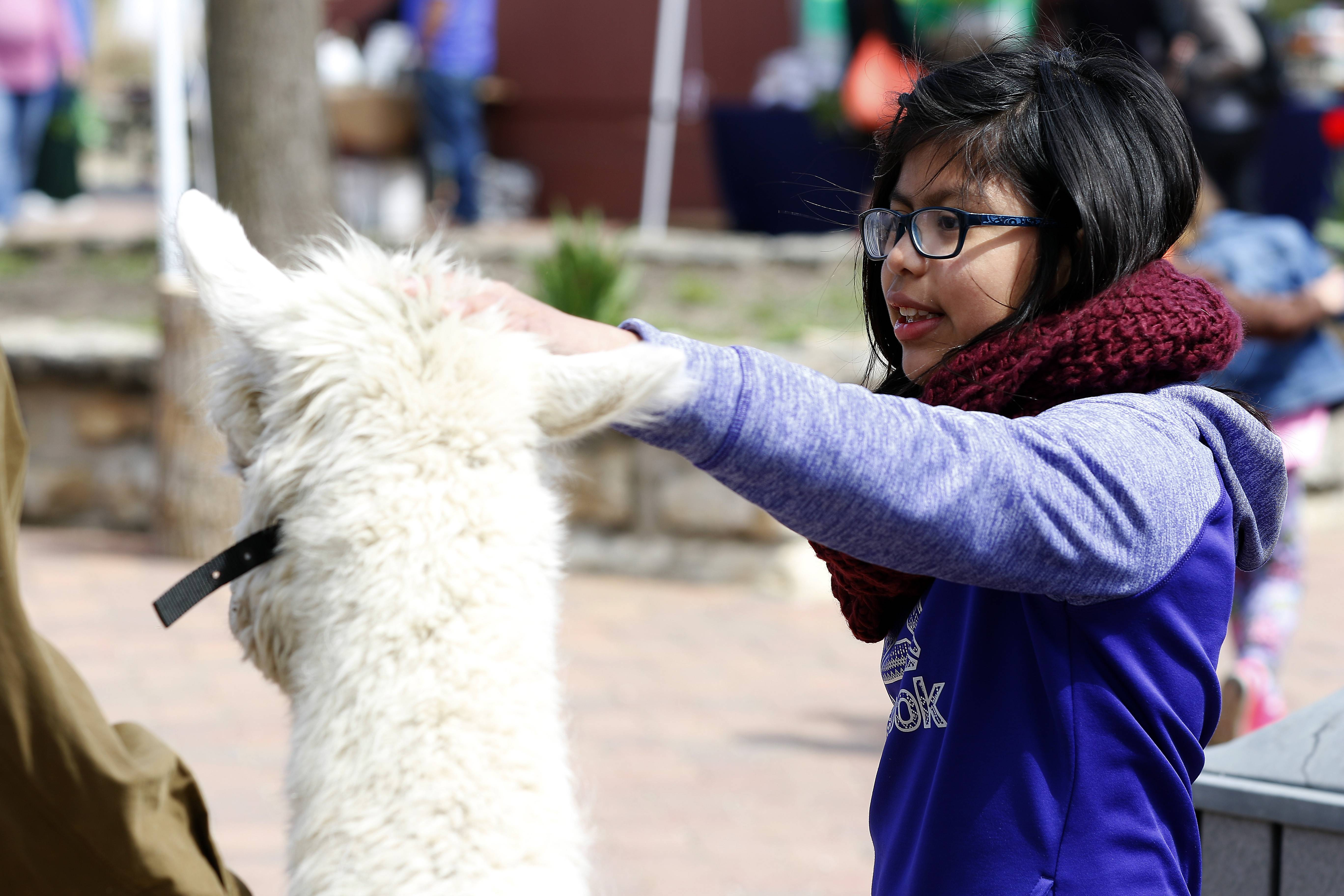 "Emma Moats, 10, of St. Charles pets Pascal, an alpaca from Inspiration Farm Alpacas in St. Charles, during Earth Day at Peck Farm Park in Geneva on Saturday. ""I love every animal,"" Emma said, but she admitted she was a bit apprehensive about alpacas."