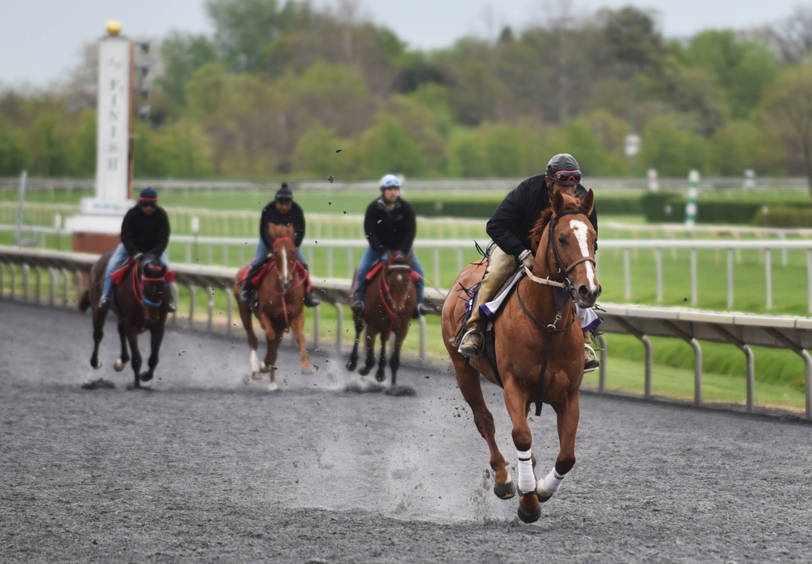 Horses work out at Arlington on Thursday morning in preparation for opening day Friday. Arlington has 71 live racing dates this season.