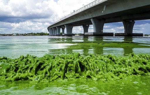 FILE-In this June 27, 2016 file photo, water full of algae laps along the Seweall's Point shore on the St. Lucie River, Fla. Despite hundreds of millions of tax dollars spent to reduce pollution in Florida's 153-mile-long Indian River Lagoon, an Associated Press analysis of water quality data from 2000-2015 found stark increases in pollutants that cause harmful algal blooms. (Richard Graulich/The Palm Beach Post via AP, File)