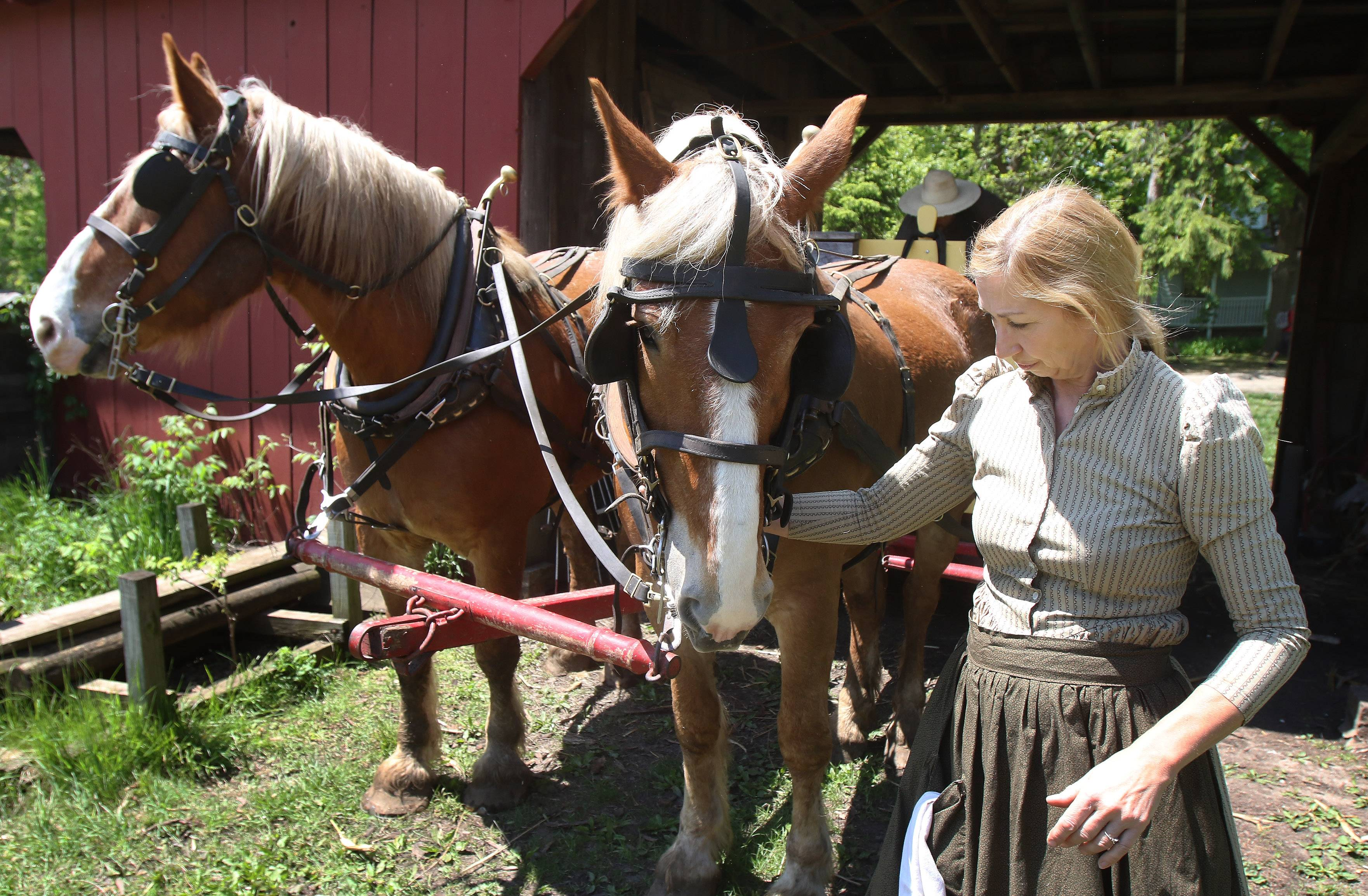Caroline Bezik, interpreter of living history at the farm, connects the horses to the wagon at Volkening Heritage Farm in Schaumburg on Sunday. Families spent Mother's Day at the Spring Valley Nature Center farm learning about the farm, animals, and the history of Schaumburg's farm families.