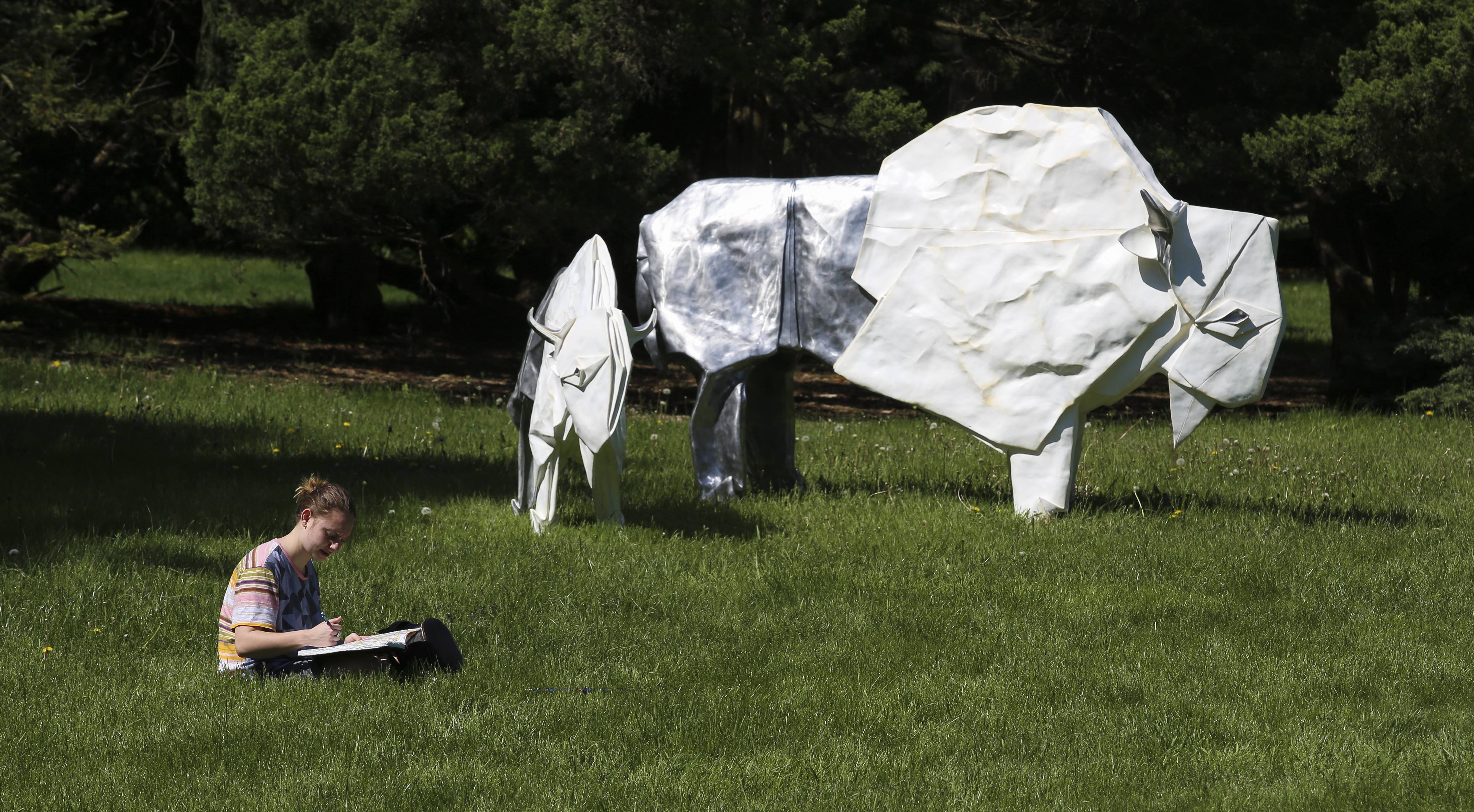 "Sara DeZara of Glen Ellyn makes some drawings next to ""White Bison,"" part of the ""Origami in the Garden"" exhibit visiting the Morton Arboretum. Sculptures are crafted from sheets of metal folded like paper."