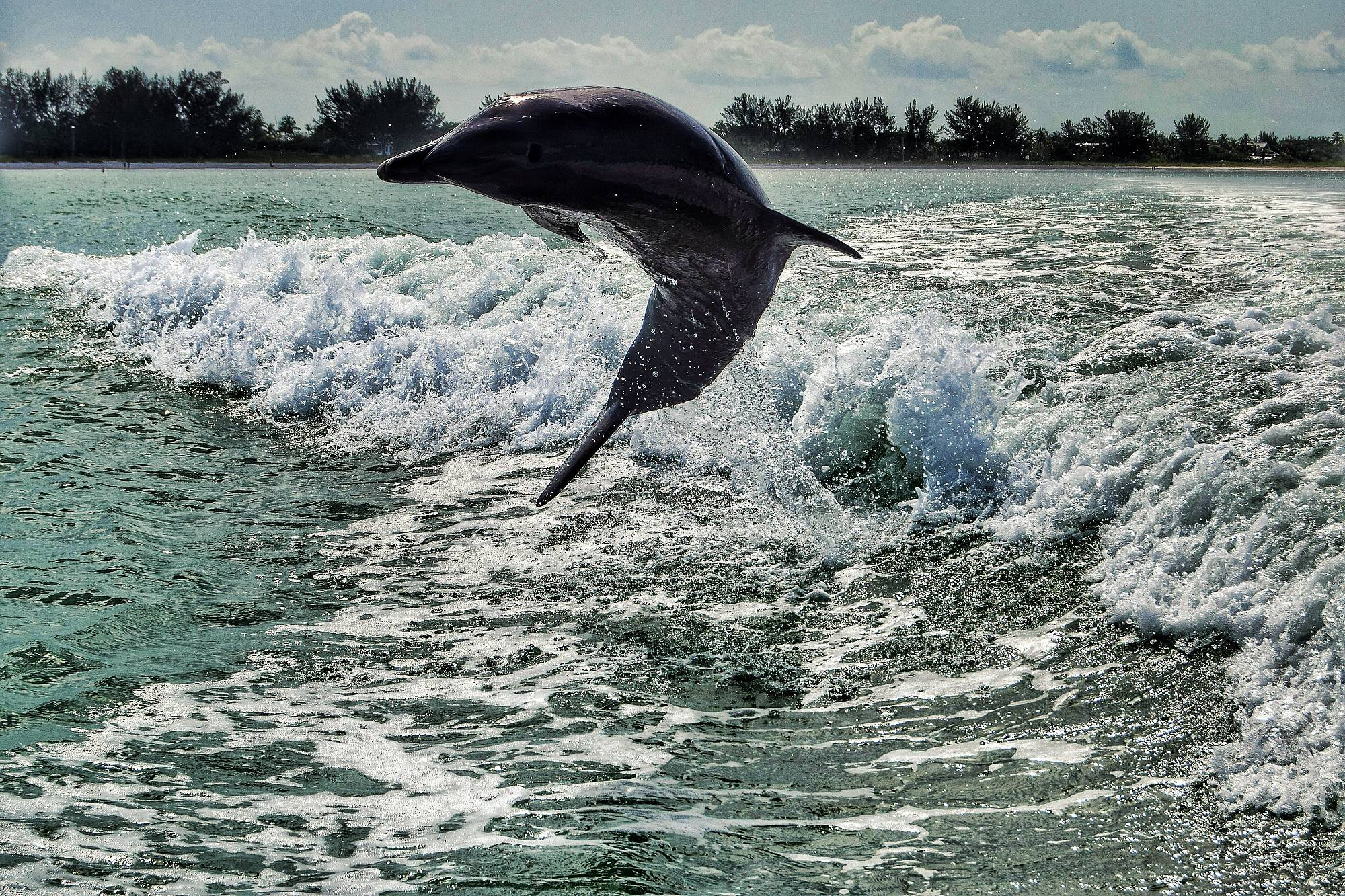 Dolphin in Sanibel, FL putting on a show for our boat tour!