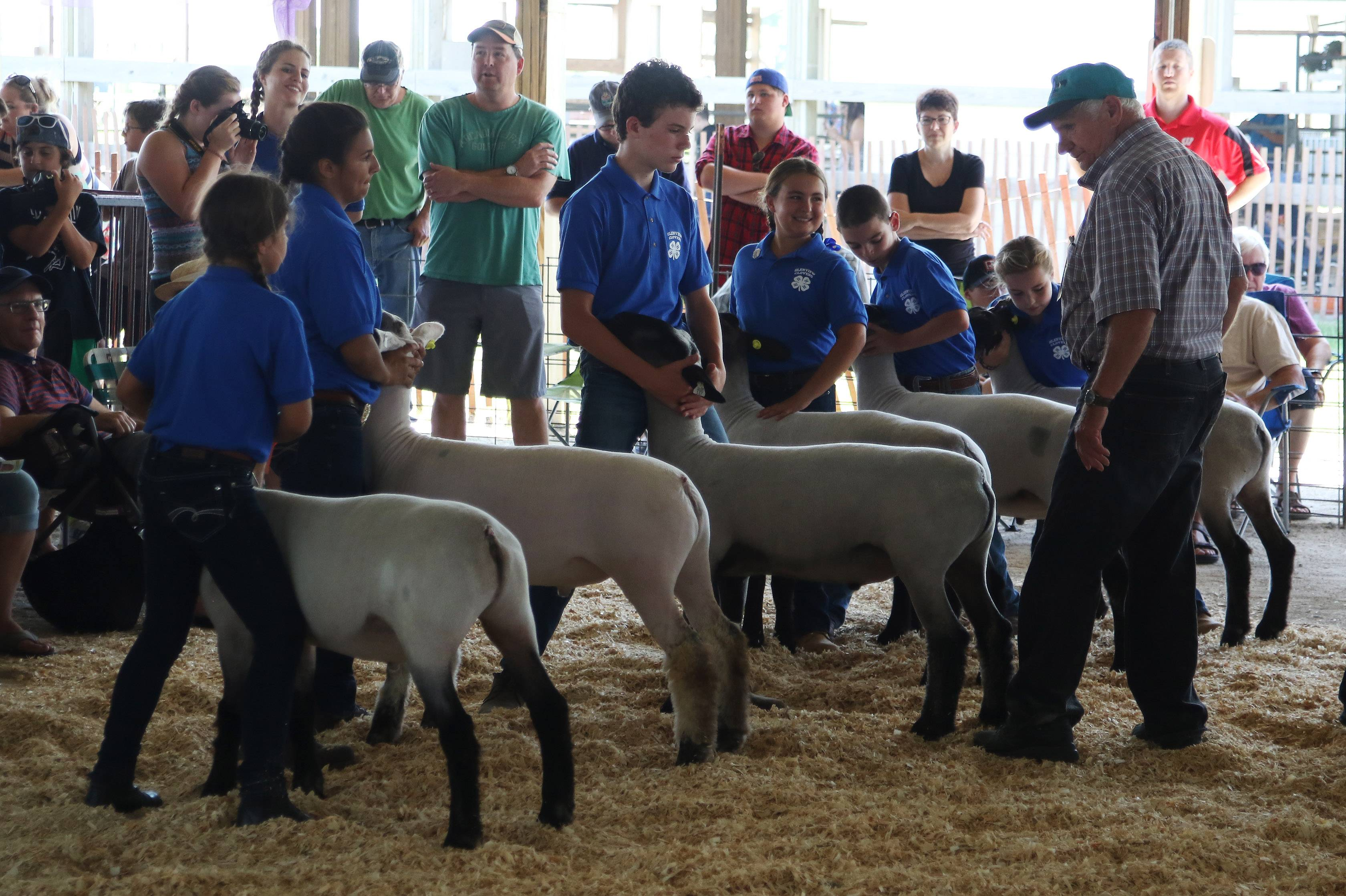 A judge examines a group of sheep during last year's Lake County Fair. This year's fair takes place July 26-30 at the Lake County Fairgrounds in Grayslake, featuring animal judging and demonstrations, live music, motor sports events and more.