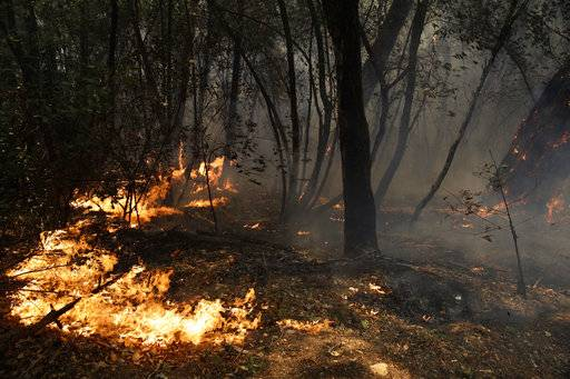A wildfire burns along the Highway 29 Thursday, Oct. 12, 2017, near Calistoga, Calif. Officials say progress is being made in some of the largest wildfires burning in Northern California but that the death toll is almost sure to surge.