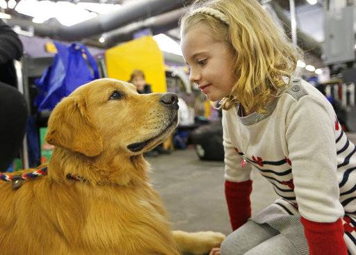 Evangeline Wendt, 7, right, visits with a golden retriever named Tank during the 142nd Westminster Kennel Club Dog Show in New York, Tuesday, Feb. 13, 2018. (AP Photo/Seth Wenig)