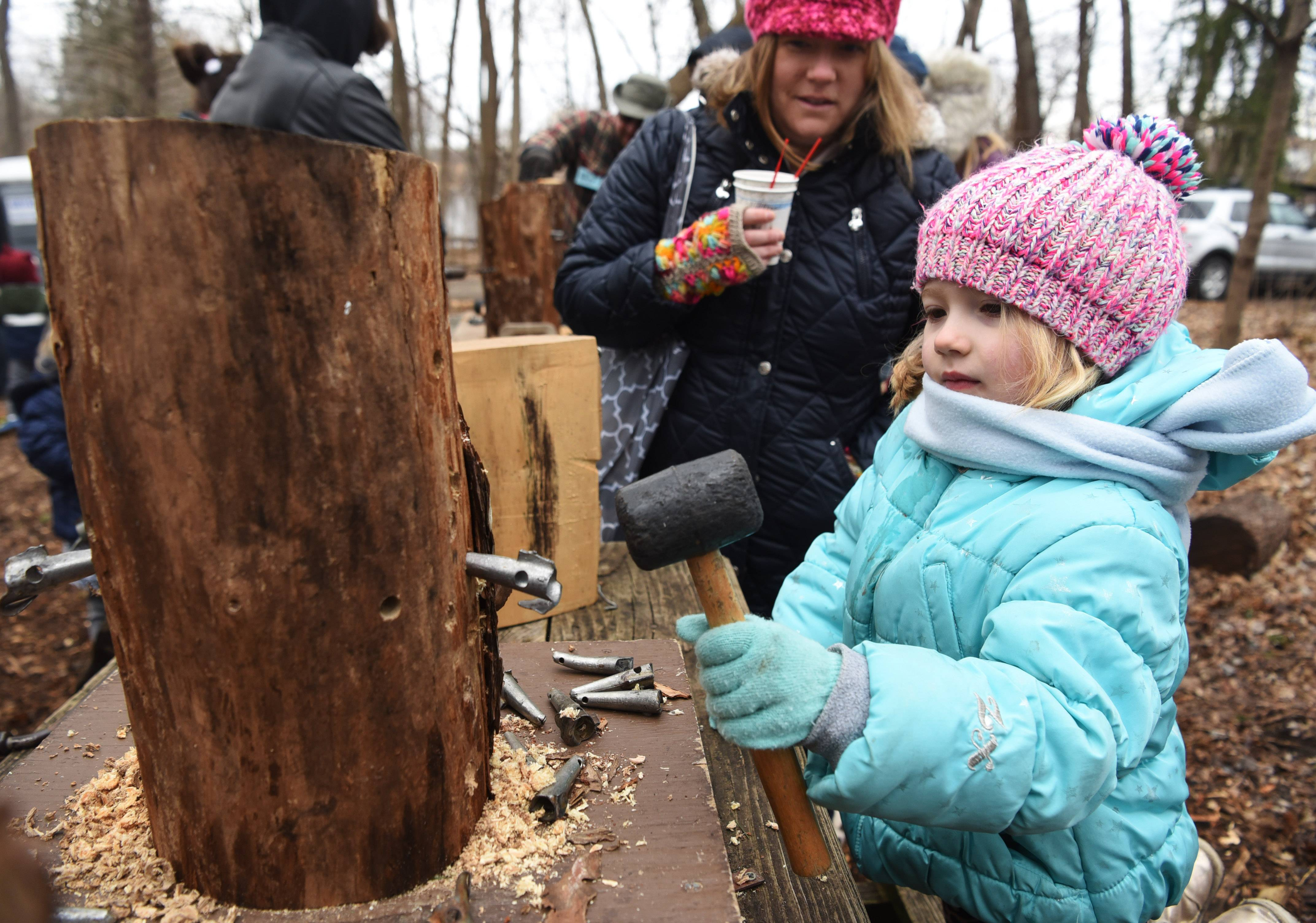 Taylor Corrales, 6, of Roselle learns how to tap us into a maple tree to draw the sap used in making syrup while attending last year's Sugar Bush Fair at Spring Valley Nature Center in Schaumburg. The annual event returns this weekend.