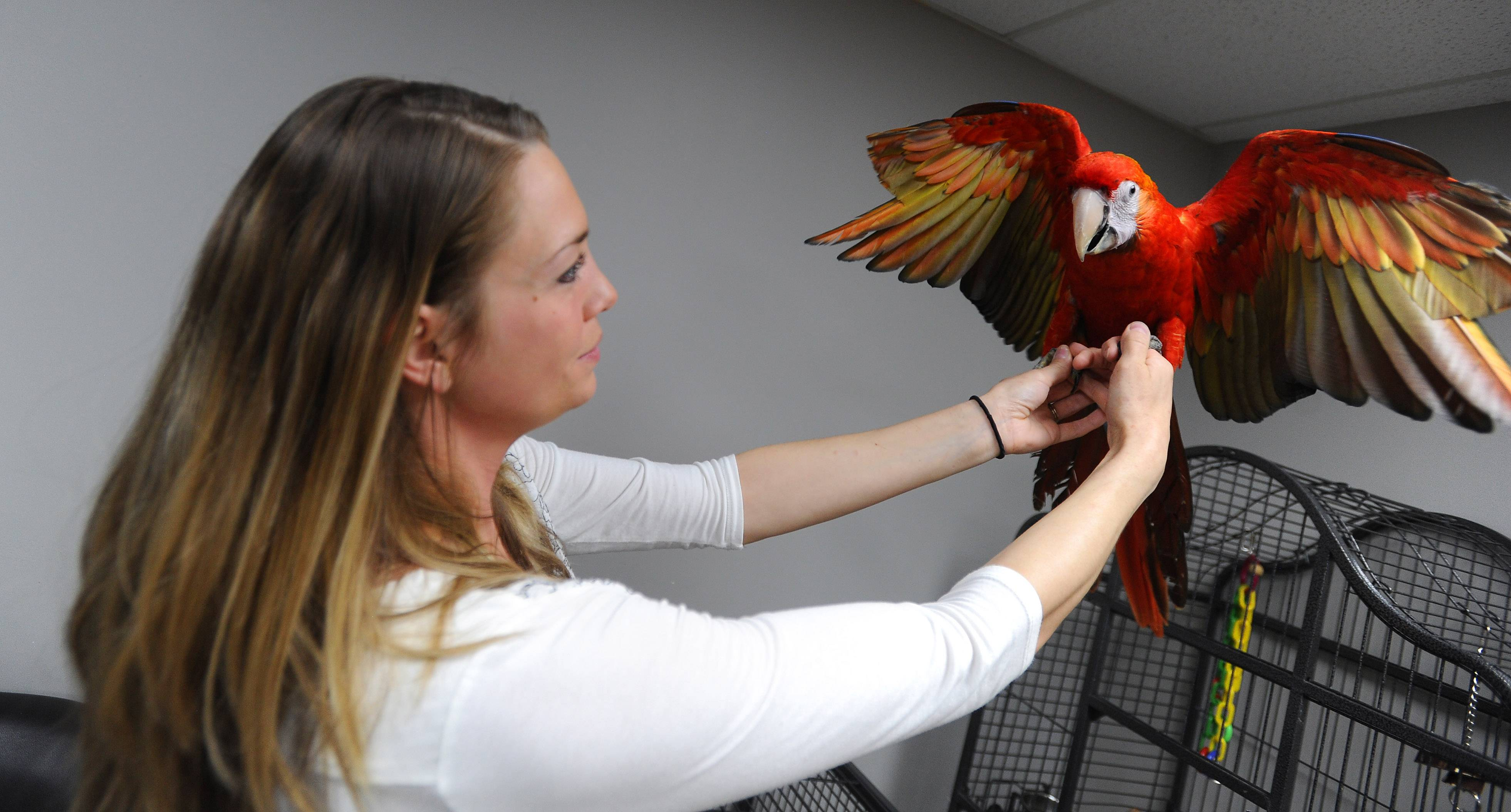 Parrots are, naturally, among the highlights at Parrot Stars, an exotic bird/avian specialty store now open in downtown Arlington Heights. Alexis Highland is the store manager.