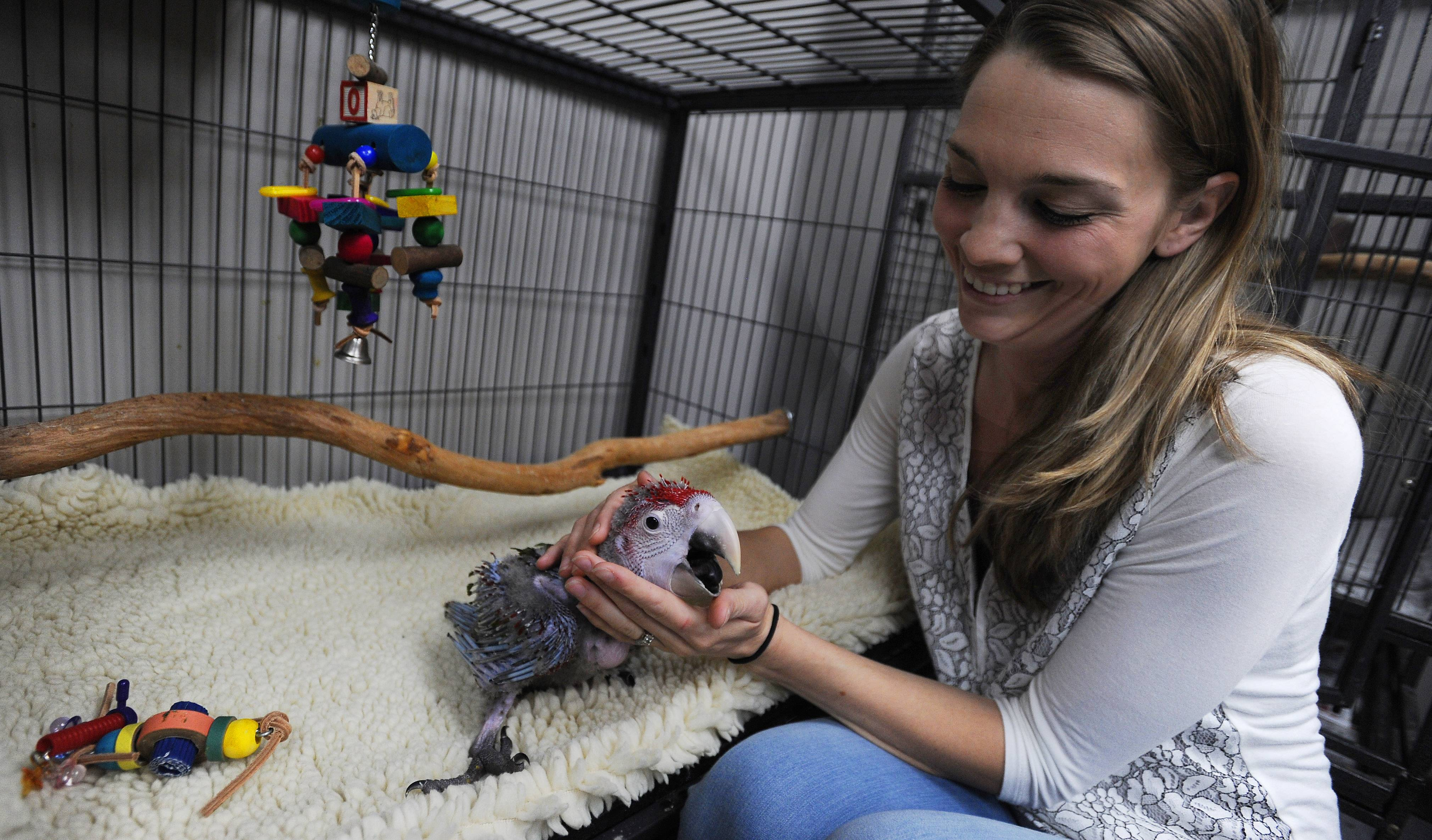 Store manager Alexis Highland has had a love for birds since she was a child. Here, she shows off one of the baby birds at Parrot Stars, an exotic bird store she manages in downtown Arlington Heights.