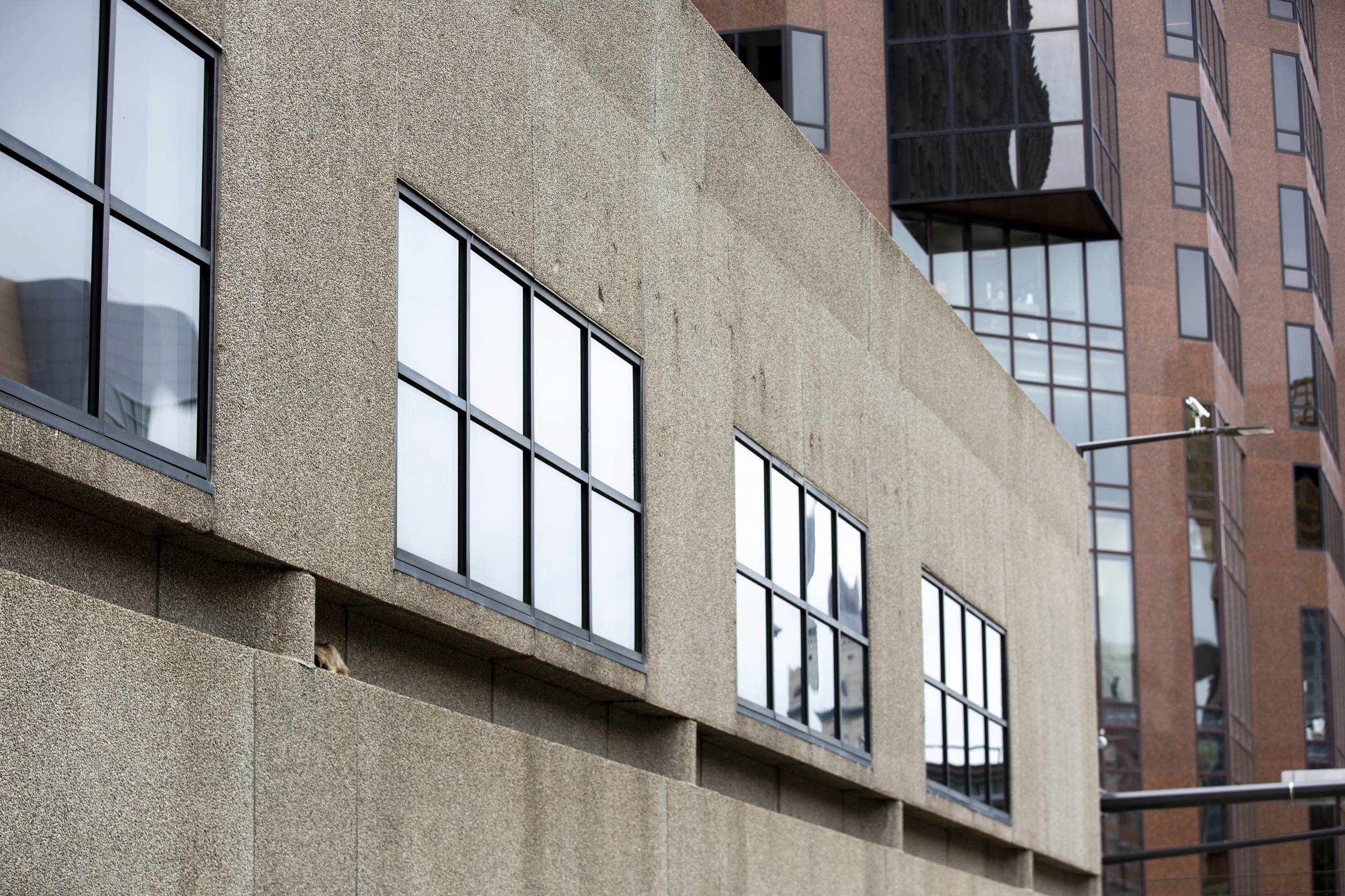 A raccoon sleeps on a ledge on the side of the Town Square building in St. Paul.