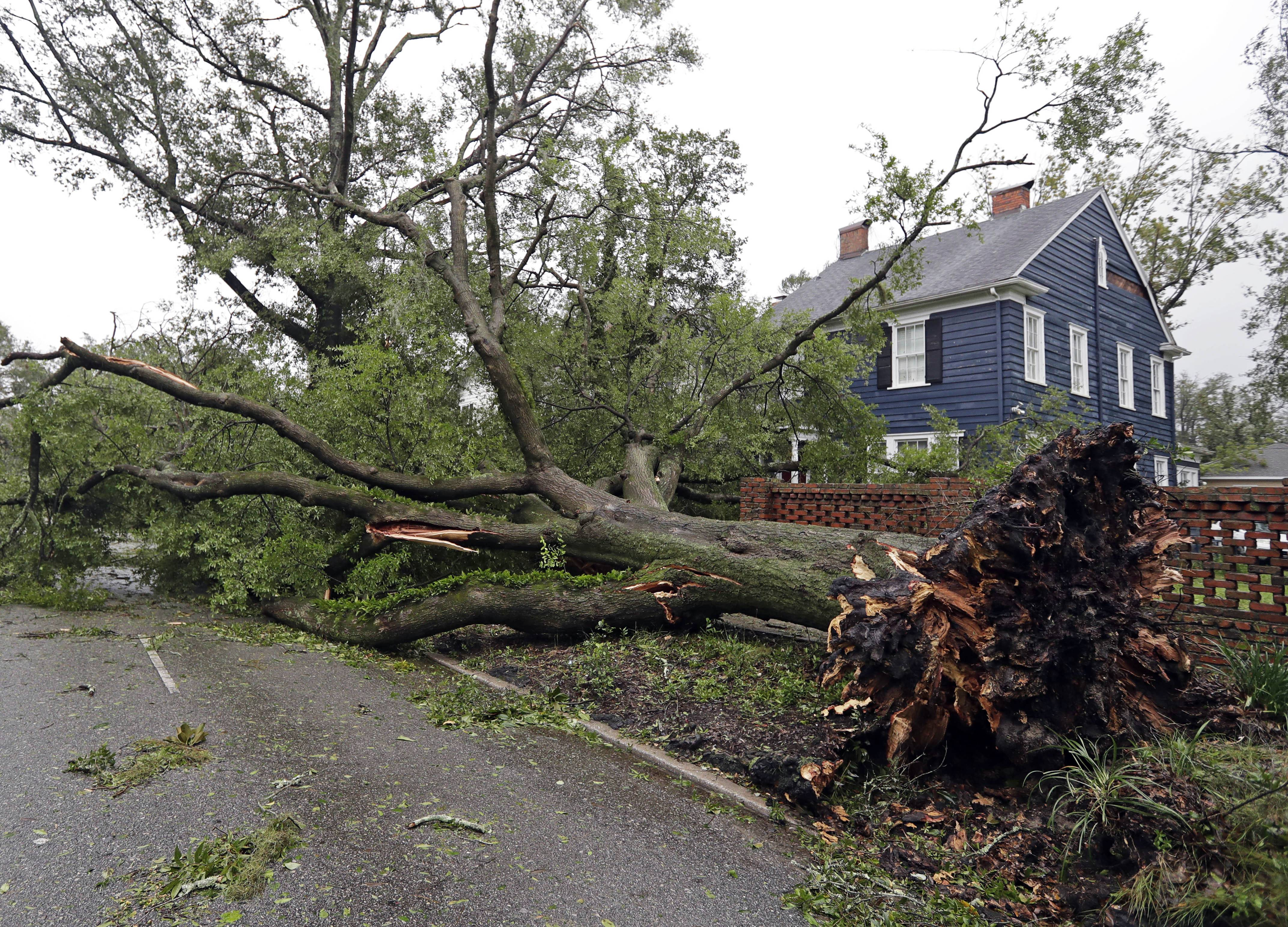 A tree uprooted by strong winds lies across a street in Wilmington, N.C., after Hurricane Florence made landfall Friday, Sept. 14, 2018.