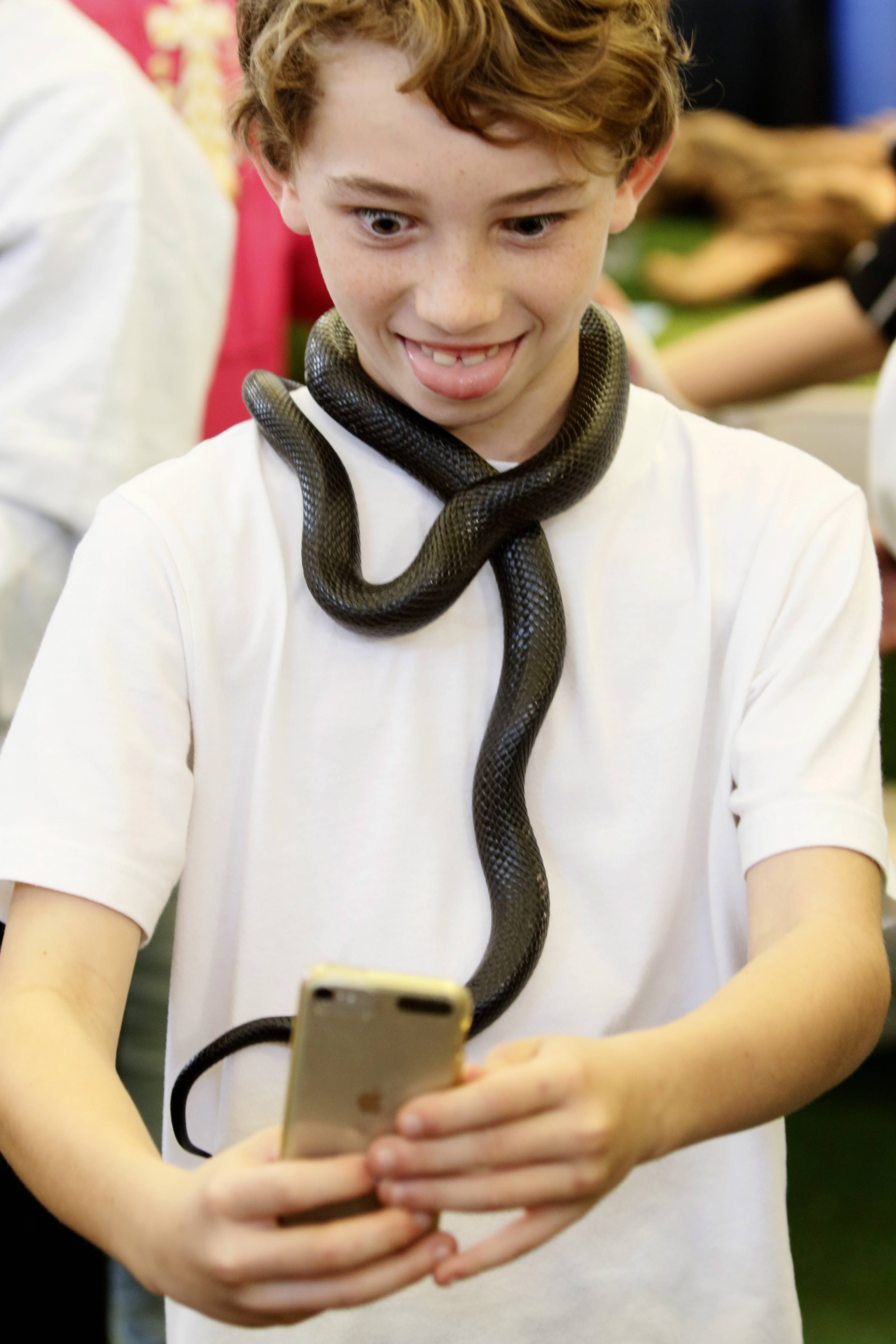 Joe Vavra, 11, of St. Charles takes a selfie with a Mexican milk snake at a previous Chicago Pet Show.