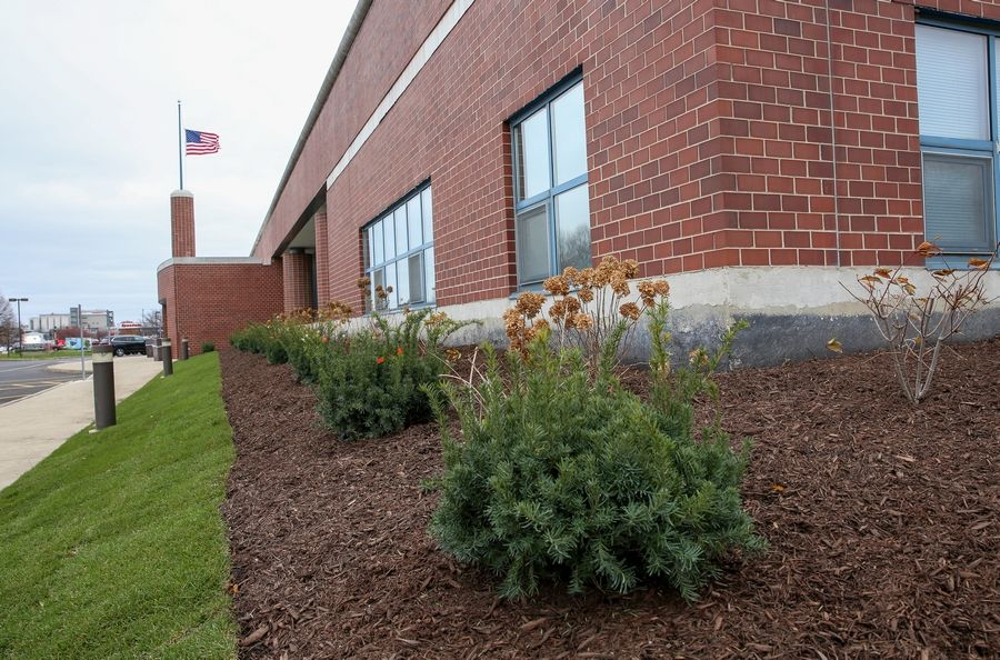 The U.S. Postal Service has installed some new plantings in the place of a former pollinator garden grown by Carolyn Finzer of Naperville at the Naperville post office on Ogden Avenue.