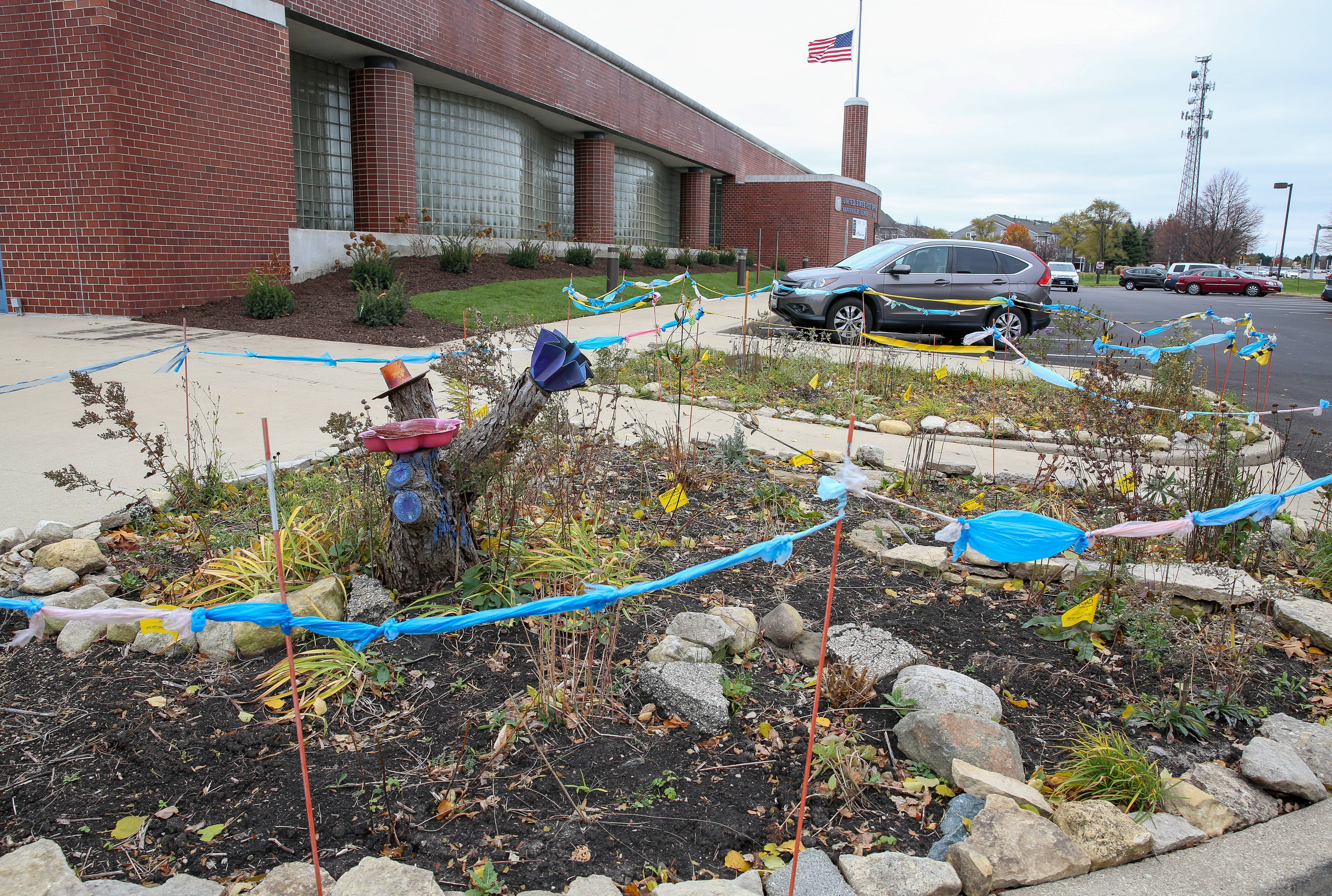 Although the U.S. Postal Service installed some new plantings near the entrance to the Naperville post office on Ogden Avenue, in the place of a former pollinator garden, two small landscaped islands in the parking lot, still contain prairie pollinator plants grown by gardener Carolyn Finzer of Naperville.