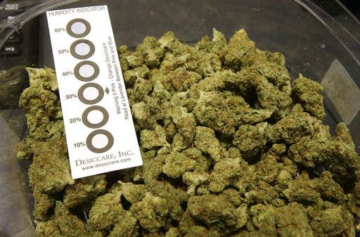 "In this Wednesday, Oct. 17, 2018 photo a humidity indicator rests in a bowl of a strain of cannabis called ""Walker Kush"" at New England Treatment Access medical cannabis dispensary, in Northampton, Mass. The Walker Kush strain of cannabis is intended for legal recreational consumption once cannabis products can be sold legally in the state. Within days perhaps, the medical marijuana dispensary in Northampton expects to receive the final go-ahead to throw its doors open to anyone 21 or older who wants to purchase cannabis products ranging from flower to edibles, creams and even suppositories."