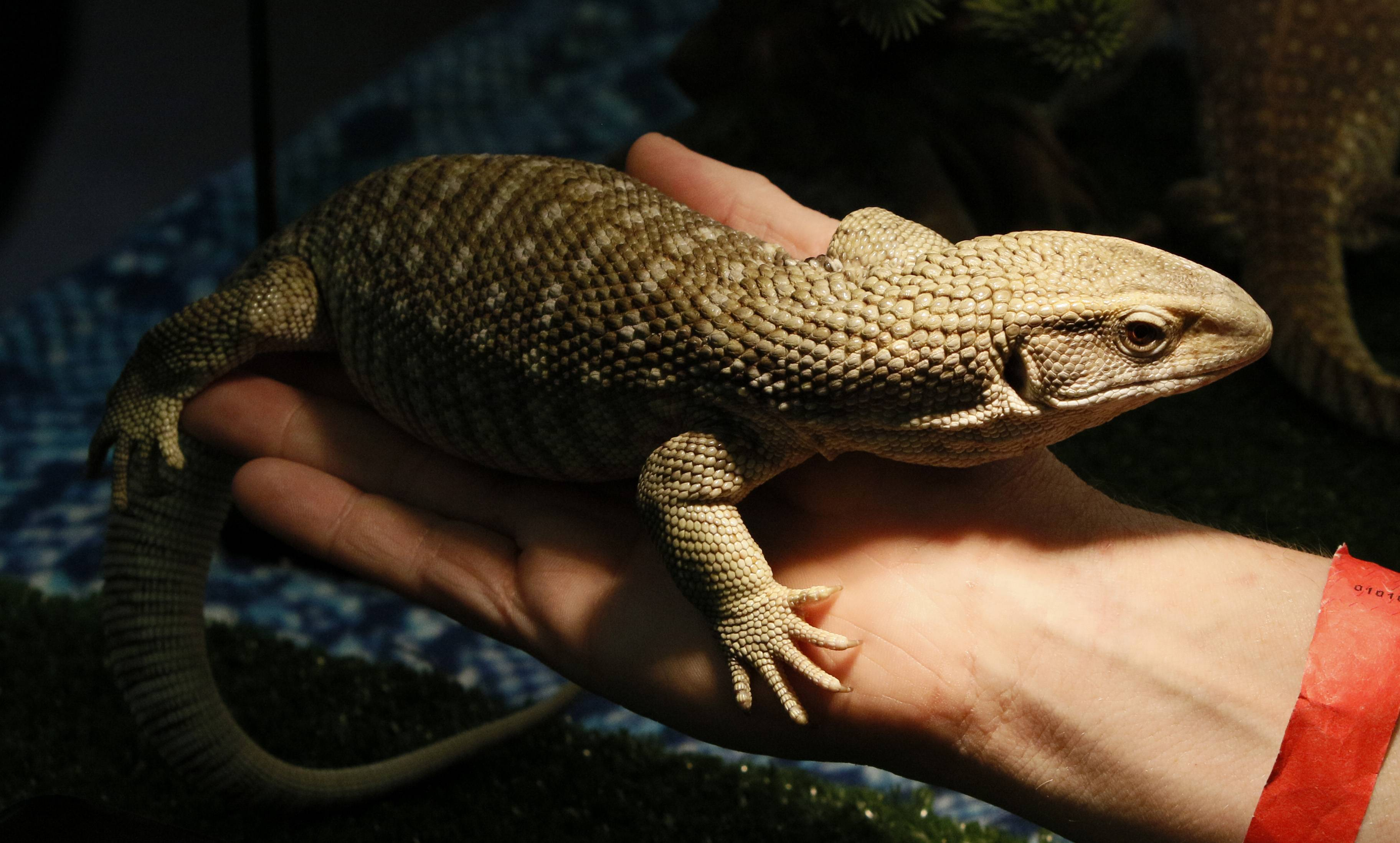 Interact with reptiles and more during the Chicago Pet Show at the Kane County Fairgrounds this weekend.