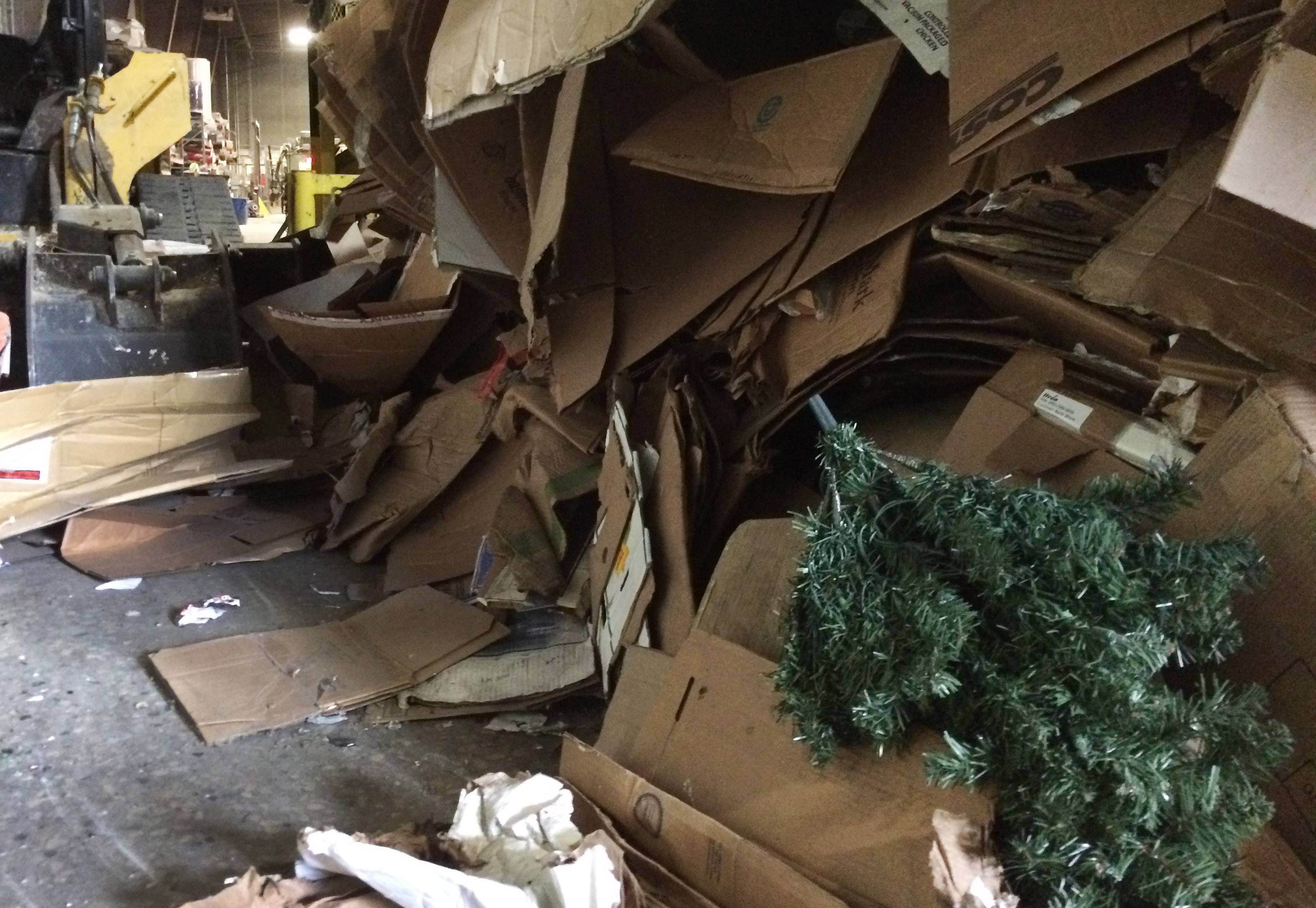 A small artificial Christmas tree is out of place in a mountain of cardboard at Waste Management facility in Grayslake, where recyclable materials are processed.