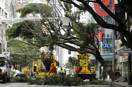 A work crew removes branches from a tree on Mission Street in San Francisco, Thursday, Jan. 17, 2019. Heavy rain, snow and wind pummeled much of California Thursday, causing at least five deaths, leaving thousands without power and forcing wildfire victims threatened by floods to flee their homes.