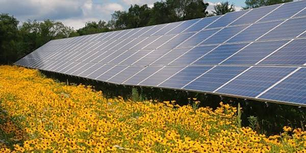 The Environmental Defenders of McHenry County is offering a workshop for solar developers and landscaping firms on designing, planting and maintaining a native plant community on a solar farm.
