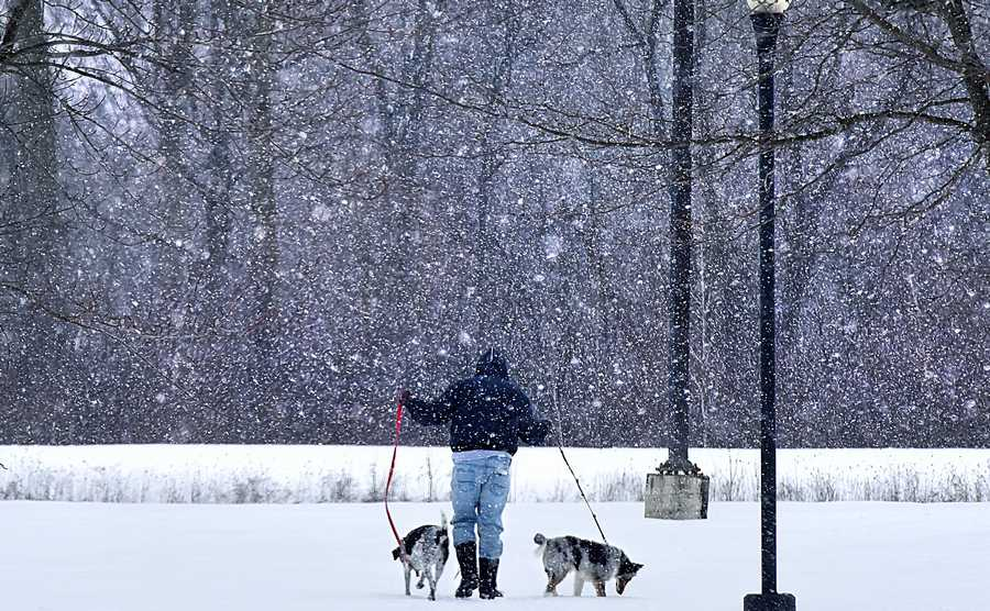 A pet owner and thier dogs walk in the falling snow in Converse Park in Island Lake Thursday afternoon.